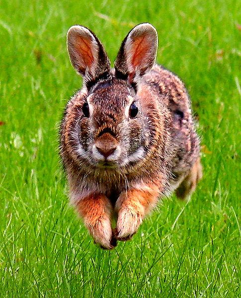 Garden pests the planters post vegetable gardening blog - How to keep rabbits out of a garden ...