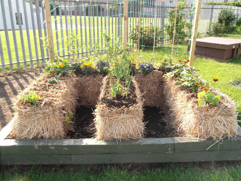 straw bale vegetable garden - Small Vegetable Garden Ideas Pictures
