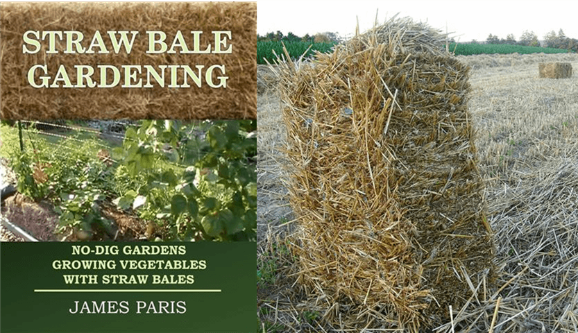 straw bale garden planting hay bale straw bale gardening growing vegetables in hay bales