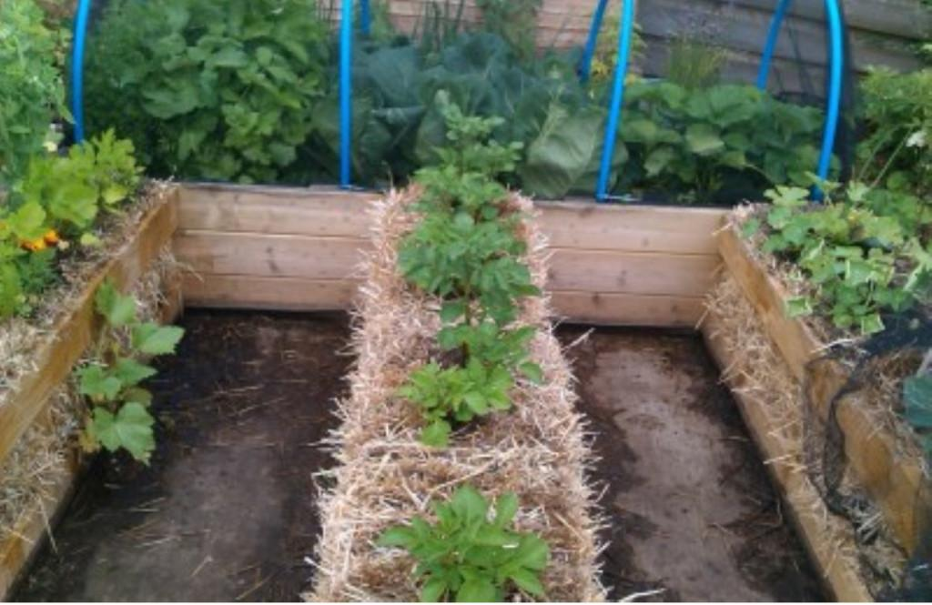 Growing Vegetables Using An Rs Combo The Planters Post